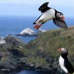 Shetland Nature